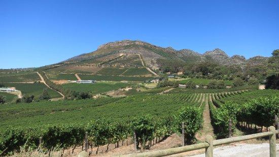 Constantia, Sør-Afrika: wijndomein