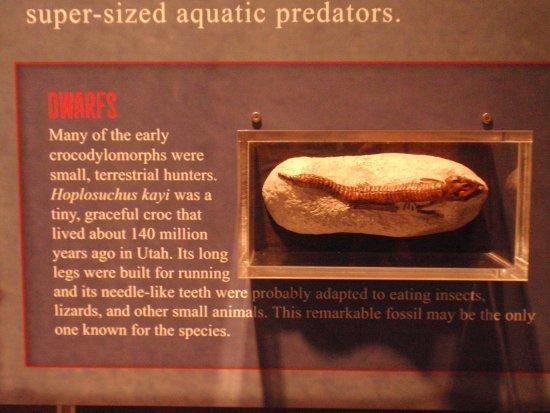 Bozeman, MT: Sample display in the museum