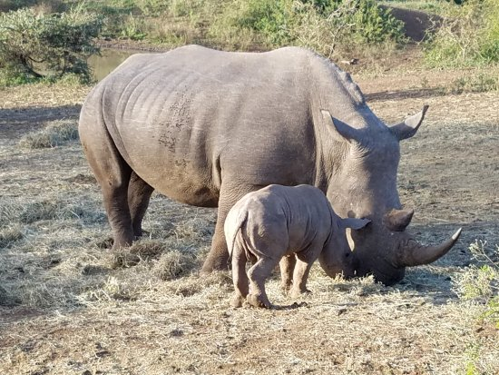 Hluhluwe, South Africa: Mother and child