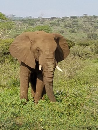 Hluhluwe, South Africa: Large female