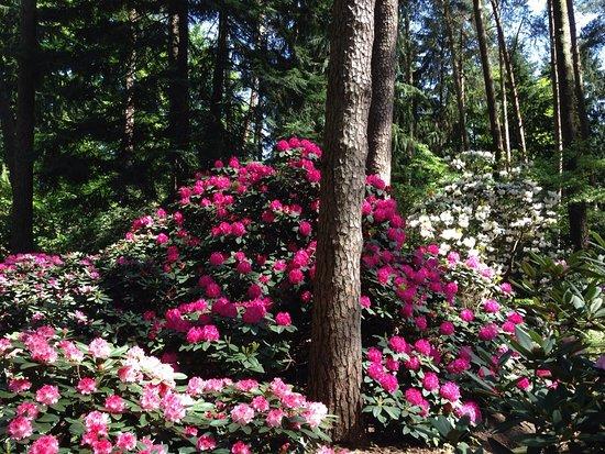 rhododendronpark bruns bad zwischenahn tyskland omd men. Black Bedroom Furniture Sets. Home Design Ideas