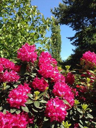 rhododendronpark bruns bad zwischenahn alles wat u moet weten voordat je gaat tripadvisor. Black Bedroom Furniture Sets. Home Design Ideas