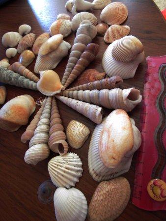 Sanya, China: Улов ракушек июнь-2017 в заливе Санья бей