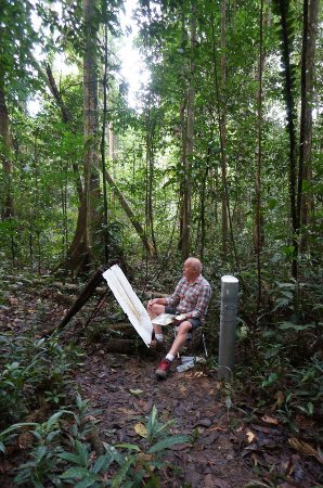Palo Alto, CA: Tony Foster painting in the Borneo rainforest.