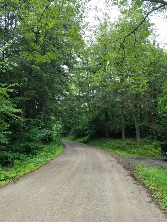 Forksville, PA: Dirt Road