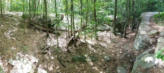 Rock Garden - Picture of Worlds End State Park, Forksville