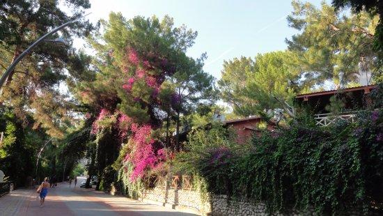 Armas Kaplan Paradise: Дорога на пляж