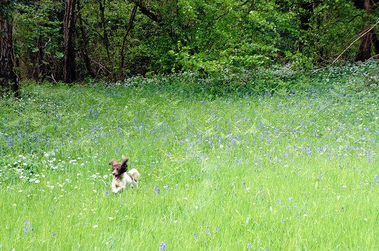 Dunsford, UK: dog friendly with 4 acres to play in