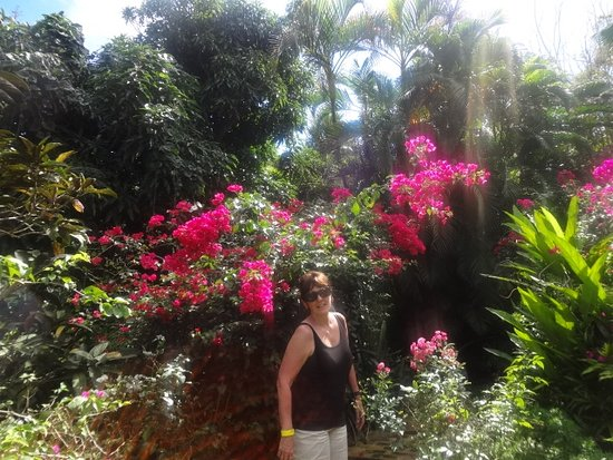 Amazing Plantation Crown And Hawk Botanical Garden: My Wife At Just One, Of Many,