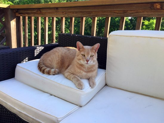 Lost River, Virginia Occidental: Cinnamon the hotel cat. Extremely friendly!