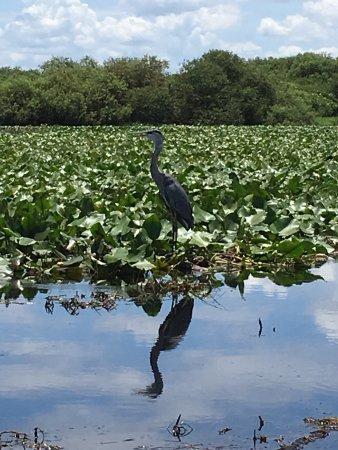 Saint Cloud, FL: photo3.jpg
