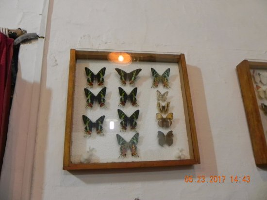 4d5f14e1c2917 Butterfly Research Centre and Fundraiser Cafe: BEAUTY OF NATURE CAPTURED ON  CAMERA - BUTTERFLIES