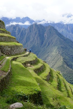 Llama Path: The Andes