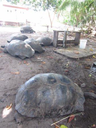 Praslin, Seychellerna: Île Curieuse