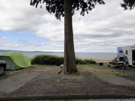 Willingdon Beach Campsite: The campsite with the tree