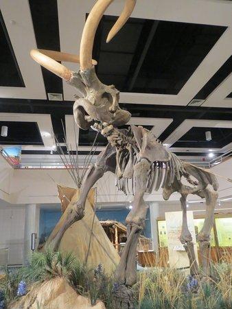 Price, UT: Woolly mammoth