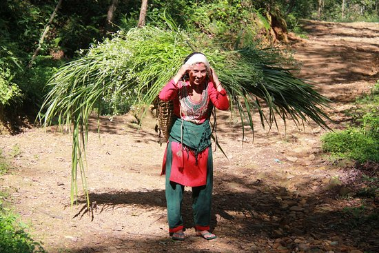 Balthali, Nepal: Woman carrying grass for cattle