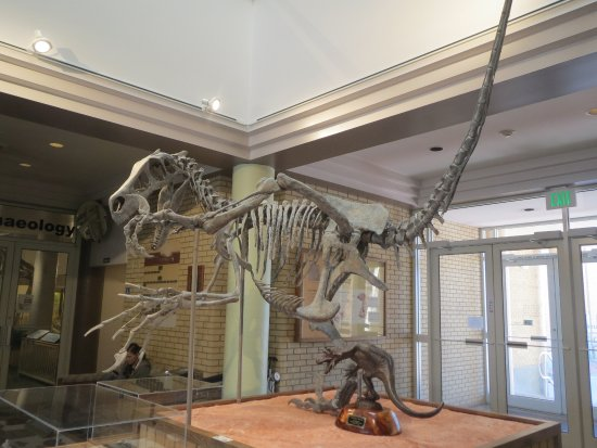 Price, UT: Recently discovered in Utah (Utahraptor?)