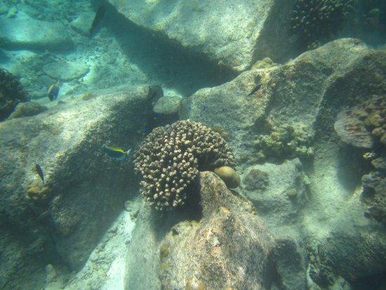 Остров Праслен, Сейшельские острова: coraux