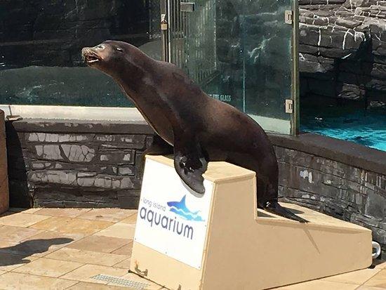 Riverhead, NY: sea lion show
