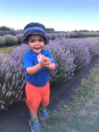 NEOB Lavender - Niagara Essential Oils & Blends : little boy enjoying lavender neob lavender