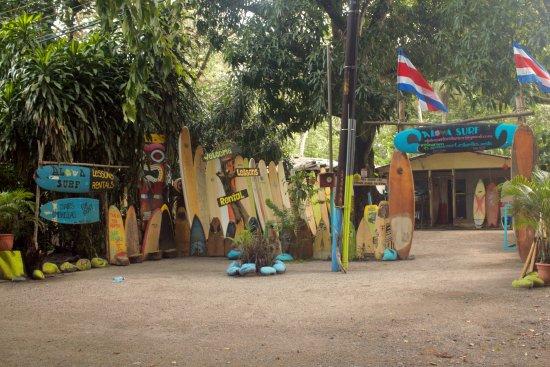 Esterillos Oeste, Коста-Рика: En Aloha Surf es un lugar para tener tus clases de surf, o alquilar tu tabla de surfear.
