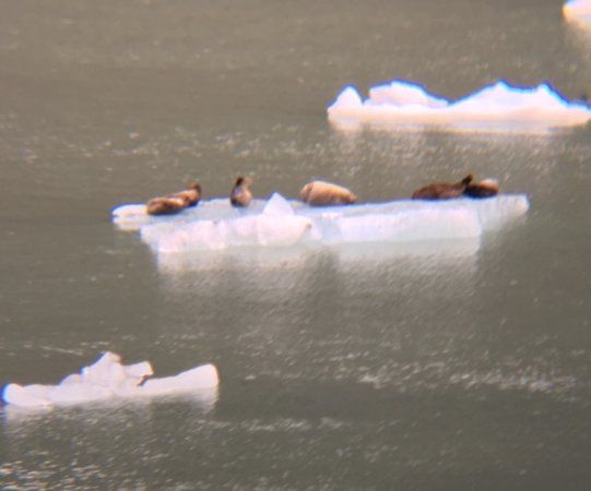 Tracy Arm Fjord: Seals!