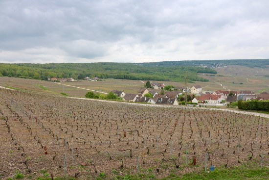 Paris Wine Day Tours : The beautiful countryside