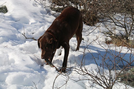 Blue Hills Reservation: Benson with stick