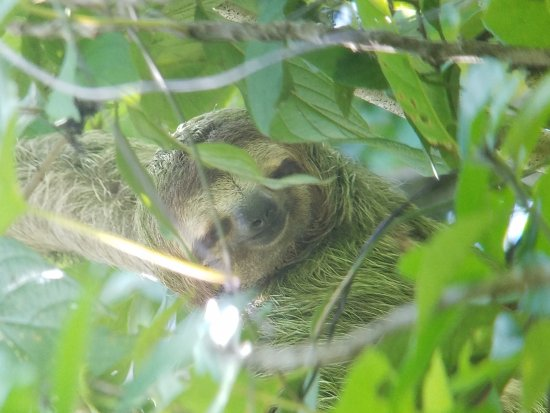 Quepos, Costa Rica: 20170625_122358_large.jpg