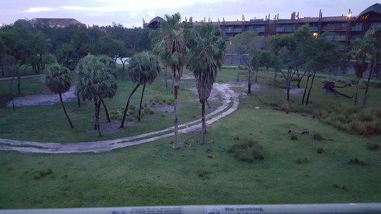 Disney's Animal Kingdom Villas - Kidani Village: savanna view, too early for the animals