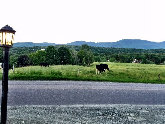 Bistro at Ten Acres: Fun to watch the cows graze in the pasture across the street