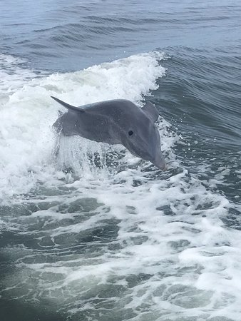 Cortez, FL: The dolphin were following the boat and playing in the wake!