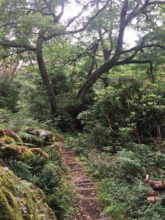 Balmacara Estate and Lochalsh Woodland Walks照片
