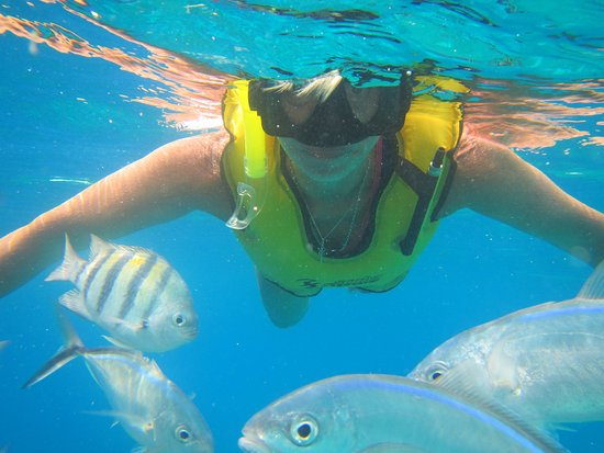 Swim with Turtles - Review of Cozumel Tours, Cozumel, Mexico