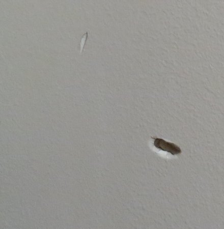 Econo Lodge Inn & Suites Canandaigua: Hole in the wall in the room.