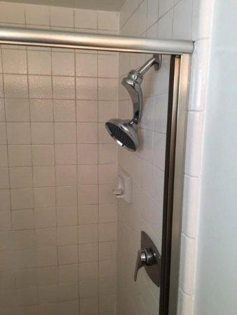 Guerneville, CA: cheapo showerhead