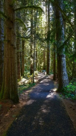 Welches, OR: There are over a mile of trails