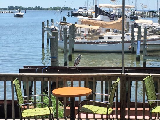 Rock Hall, MD: Wildlife and marina view