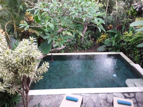 Plataran Canggu Resort & Spa: Gorgeous private infinity pool