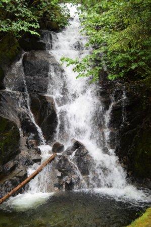 Best Alaska Shore Excursions: Locals Pick The Best Cruise ...