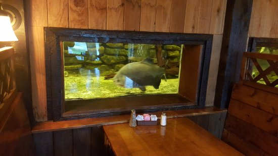 Grafton, IL: Fish tank at end of dining table.