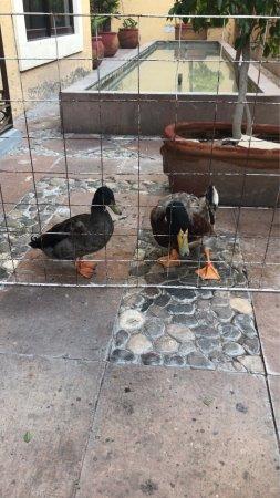 Tehuacan, México: photo2.jpg