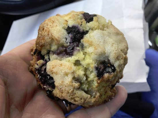 Winter Garden, FL: ah, magnificant! The Blueberry Scone!