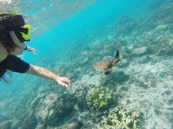 Reef Daytripper: Amazing