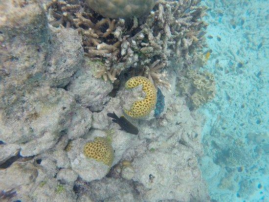 Reef Daytripper: Beautiful corals !