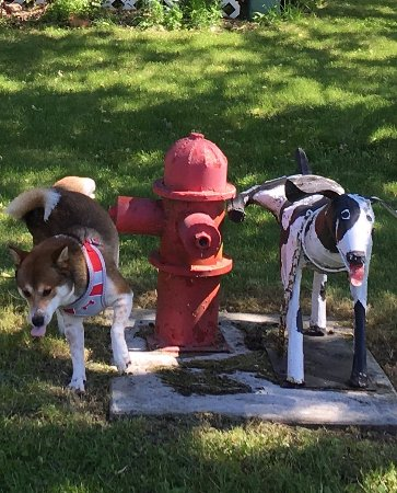 Vining, MN: I happened to snap this perfectly! Our dog mimicked the sculpture perfectly on cue! :)