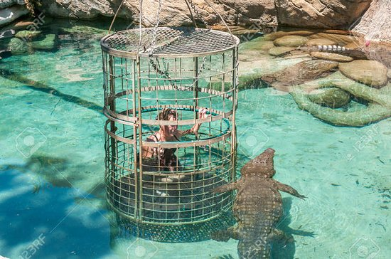 Full Day Crocodile Cage Diving og...