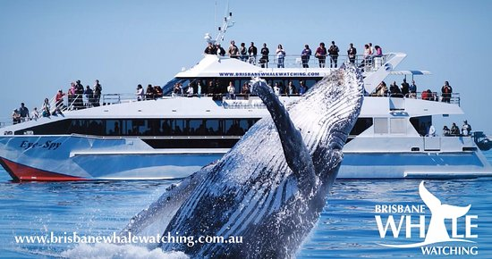 Brisbane Whale Watching