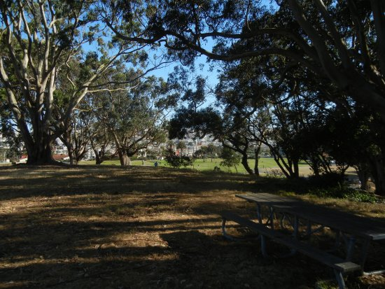 Fort Mason, the Great Meadow: Meadow from Ft Mason